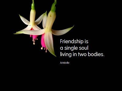 Friendship is a SIngle Soul Living in Two bodies