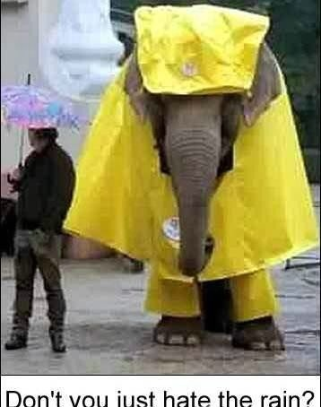 Funny Raincoat Picture