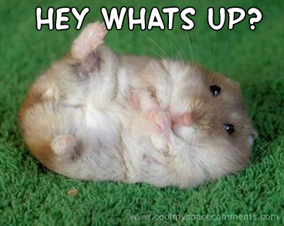 Hey Whas Up ? Funny Mouse Image
