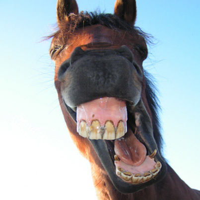 Funny Horse Showing his Teeth Picture for Facebook Sharing