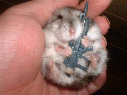 Funny Mouse with Rifle