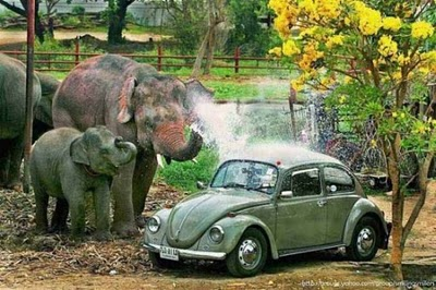 Funny Elephant Wash the Green Car