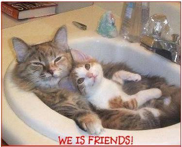 We is friends ! Funny Cat Picture
