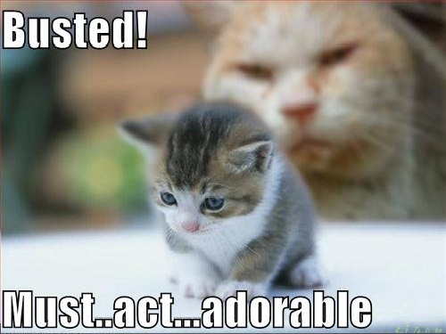 Busted Funny Cat Picture