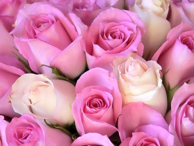Pink White Roses Picture