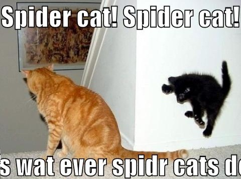 Spider Cat ! Funny Cats picture