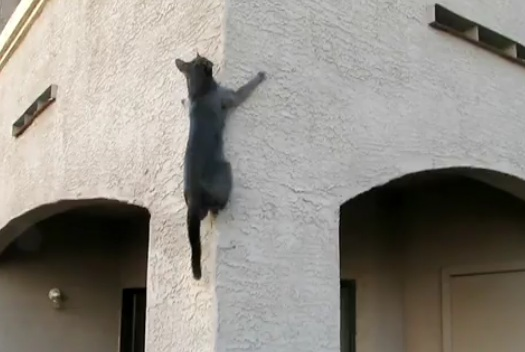 Funny Cat Riding on the Wall