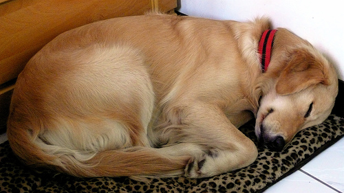 Funny Dog Sleeping Picture for Friendster