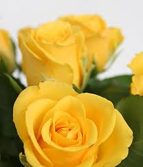 Yellow Roses Picture for Fb Share